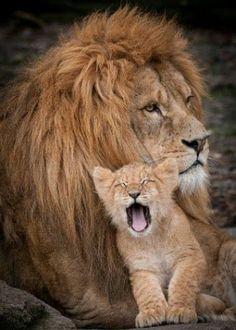 Le migliori foto sugli animali - Community - Google+
