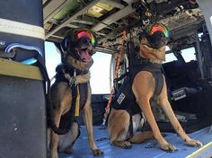 U.S. Coast Guard Maritime Safety & Security Team Belgian Malinois canines take part in helicopter proficiency training with the California Air National Guard in San Francisco Bay, California, in this U.S. Coast Guard picture taken April 5, 2016. The dogs are equipped eyewear and ear protection to keep them safe at sea from rotor wash, sea spray, foreign debris and engine noise. (Photo by Reuters/US Coast Guard)