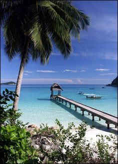 Malaisie#idée itinéraire#Perhentian-Taman Negara-Cameron Highlands-Malacca-Tioman