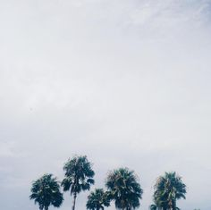 The  P a l m s  #palmtreesfordays #picturesque #vscom  #beautifulview #skyzone #vsco_lover