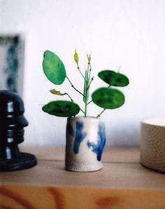 Lunaria seeds