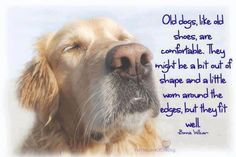 love an old dog