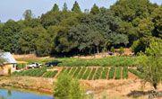 Riverhill Farm