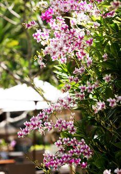 Orchids, Phuket Thailand