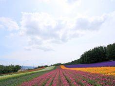 Summer in Hokkaido