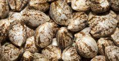 Cómo extraer aceite de semillas de cañamo y para qué puedes usarlo