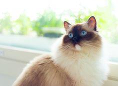 Cats, Photography, Animals, Gatos, Photograph, Animales, Animaux, Fotografie, Photoshoot
