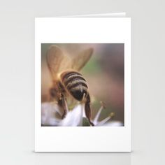 Save the bees! #savethebees #bee Autum Sasala Greeting cards