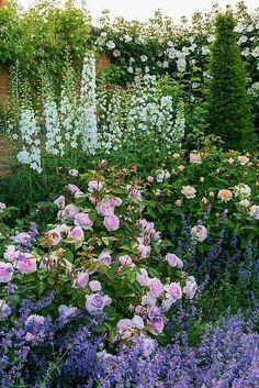 english garden Mixed Borders - Rosa Olivia Rose Austin / bred by David Austin: Back Gardens, Small Gardens, Herbaceous Perennials, Hardy Perennials, Garden Cottage, English Cottage Gardens, English Cottages, Colorful Garden, Purple Garden