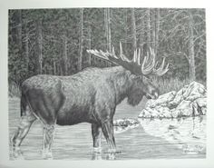 Western Pencil Art Print With Water Color - The Wanderer - Bernie Brown - Moose  -  canadian, canada.     lj