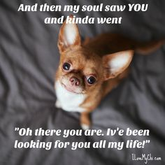 Me when I saw Jaxon through the bars of the shelter cage. I knew he was the dog for me.