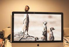 [Le Tumblr Du Jour]  «Desk Safari», des mi-hommes mi-animaux dans votre bureau !