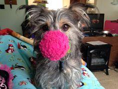 Loki Dog Of Mischief