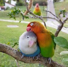 Mascotas African Grey Parrot puntada cruzada contada Kit pájaros vida salvaje