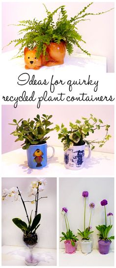 Recycle household objects as plant containers! Mugs, cups, wine glasses and ceramic biscuit pots are perfect containers for plants and give your garden a quirky style!