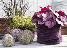 Pynt med lyngkuler sammen med hauchera i grow-in i samme fargetoner. Floral Arrangements, Diy And Crafts, Plants, Home Decor, Hobby, Craft Ideas, Autumn, Fantasia, All Saints Day