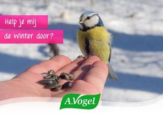 De natuur helpt ons, maar soms heeft de natuur ook een handje nodig. Help jij de vogeltjes de winter door? #natuur #vogels #sneeuw #winter