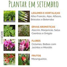 Green Ideas, Gardening, School, Crochet, Mini, Healing Herbs, Growing Vegetables, Crop Rotation, Indoor Gardening