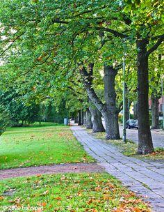 Tammitie, early autumn in Munkkiniemi, Helsinki, Finland