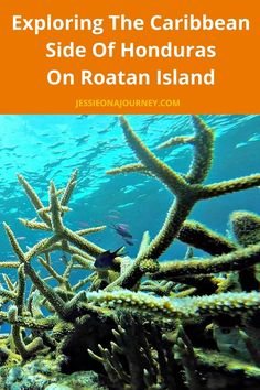 Exploring The Caribbean Side Of Honduras On Roatan IslandExploring The Caribbean Side Of Honduras On Roatan Island