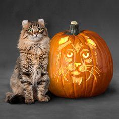 American Curl Cat Pumpkin Stencil