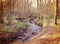 Create Your Own Stunning Website for Free with Wix Days Out In Yorkshire, Woods, Country Roads, Water, Outdoor, Gripe Water, Outdoors, Woodland Forest, Forests