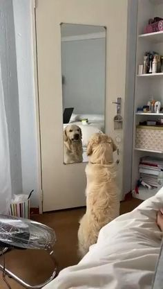 Cute Little Animals, Cute Funny Animals, Funny Dogs, Cute Animal Videos, Funny Animal Pictures, Cute Dogs And Puppies, I Love Dogs, Doggies, Photo Chat