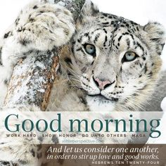 A Little Perspective Good Morning Bible Verse, Happy Good Morning Quotes, Good Morning Cards, Good Morning Beautiful Quotes, Morning Inspirational Quotes, Good Morning Greetings, Good Morning Good Night, Good Morning Images, Morning Sayings