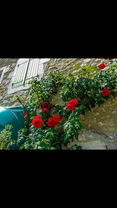 Plantes, fleurs...