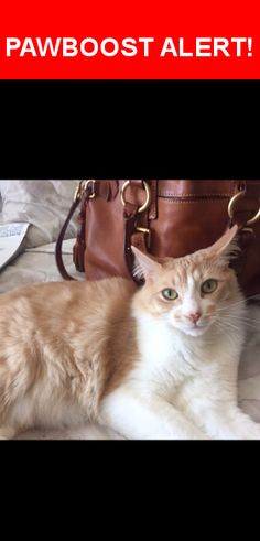 Please spread the word! Marvin was last seen in Daly City, CA 94015.    Nearest Address: Near Edgeworth Ave & 89th St