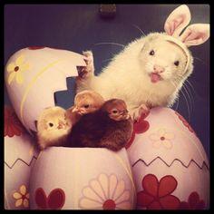 Happy Weasel Easter
