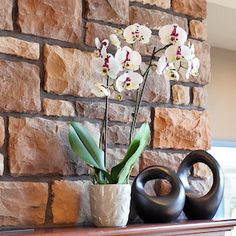 winter orchid care