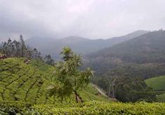 The Amazing Munnar Hill Station in India.