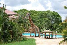 <b>Does anyone know where can I get a pet giraffe?</b>