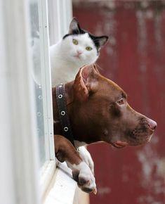 http://buzzly.fr/30-photographies-touchantes-de-chiens-qui-attendent-leur-maitre-l-amour-inconditionnel-30.html