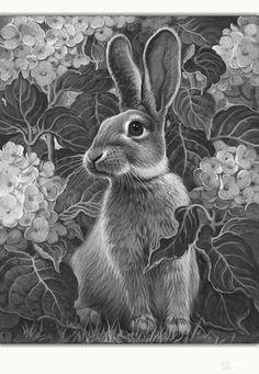 Rabbit drawing