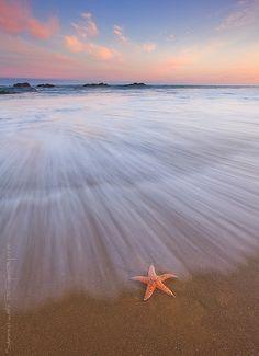 Seastar Sunrise | Flickr - Photo Sharing!