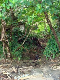 Jungle beach house, Grande Riviere, Trinidad