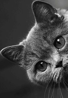 Cats are animals that are more beloved pets to pet lovers because of their spoiled and cutest. Animals And Pets, Baby Animals, Cute Animals, Cute Kittens, Cats And Kittens, I Love Cats, Cool Cats, Beautiful Cats, Animals Beautiful