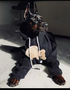 Doberman Pinscher Dog, Doberman Dogs, Dobermans, Blue Doberman, Cute Little Animals, Cute Funny Animals, Cute Dogs And Puppies, Big Dogs, Fille Gangsta