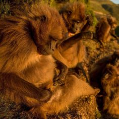 """natgeo: """"Photo @tbfrost 