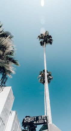 Sunset Boulevard Los Angeles California - palm trees and summertime Photo Wall Collage, Picture Wall, Los Angeles Wallpaper, Tree Wallpaper Iphone, Sunset Wallpaper, Ft Tumblr, Photo Deco, Collage Vintage, City Of Angels