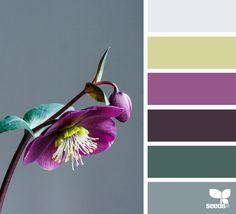 { flora hues } image via: @cloverhome.nl