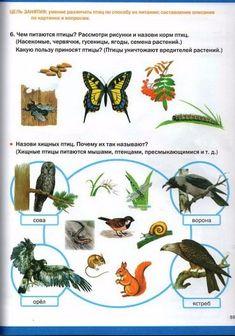 мир животных-61 (370x528, 210Kb) French Education, Homeschool, Animales, Insects, Language, Homeschooling
