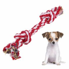Only the smartest people wont miss this sale!😆😍😎    Braided Rope Chew Knot Toy for Dog Puppy.    Use PIN15OFF for additional 15% OFF!👍    FREE Shipping Worldwide !!!✈️✈️    Get it here ---> https://www.twodollarsonly.com/1pc-braided-rope-knot-chew-toys-for-dog-puppy/😎😎    #qualityitems #affordable  #twodollarsonly #dollartree #hollar #dollargeneral #valuedollar #wholesaleprices #cheaper #freeshippingworldwide #qualityitems #affordable