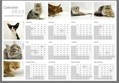 Chat Web, Cat Calendar, Fiction, My Love, Cats, Animals, My Boo, Gatos, Animales