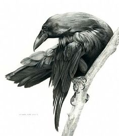 raven front flying - Google Search