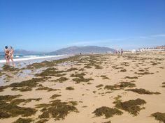 Invasión de Algas. Playa Tarifa