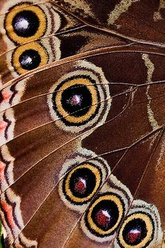 ETC INSPIRATION BLOG ART DESIGN BUTTERFLY WING CLOSE UP MACRO SHOT BEAUTIFUL COLORS PRINT photo | photographer: Fang Kuang?