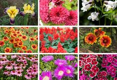 I love perennial flowers because you put the work in upfront and enjoy gorgeous flowers year-after-year. Here are 18 beautiful perennial flowers for sun.